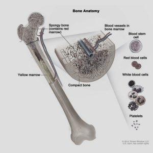 Bone Marrow Transplant Unit – Adult