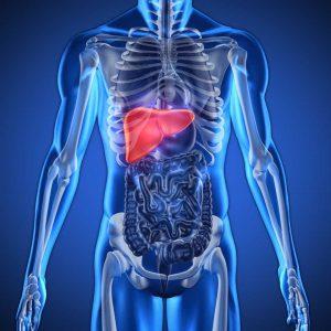 Liver Transplant Center