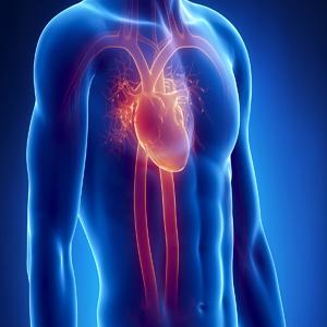 Cardiology - Adult Heart Diseases