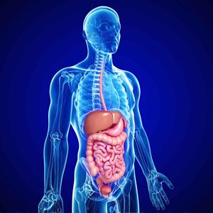 Gastroentology and hepatology