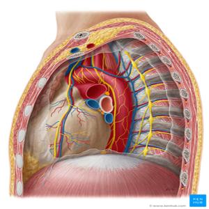 Mediastinum surgery