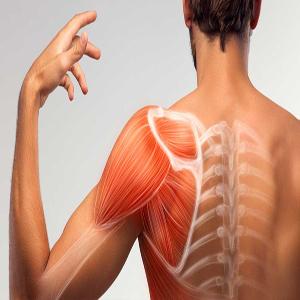 Muscular diseases rehabilitation