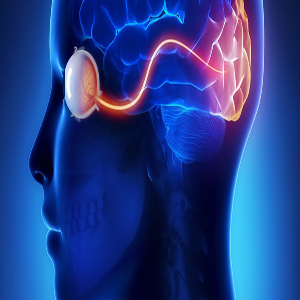 Neuro – ophthalmology